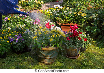 Watering flowerpots with new plants