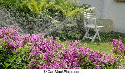 watering flowers in the yard