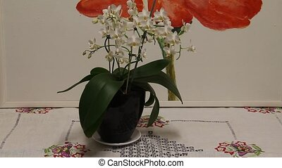 Watering flowers. Orchids
