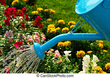 Watering flowers - Water pouring from blue watering can onto...