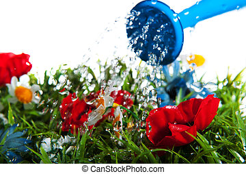 Watering flowers