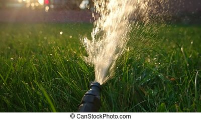 Watering garden backlit by warm sunset light. - Watering of...