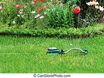 Watering garden - Watering grass and flower in the backyard