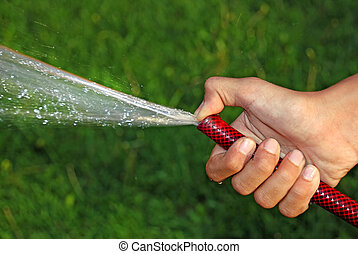 Watering grass - child hand keeping water hose over green...