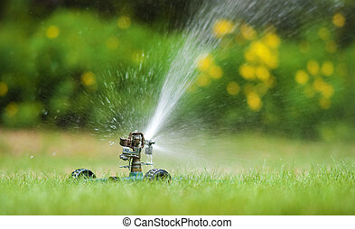 Watering lawn - Sprinkler watering lawn in summer