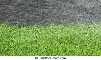 Watering lawn with sprinklers - Automatic sprinklers ...