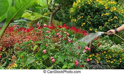 Watering - Man watering flower bed, slow motion