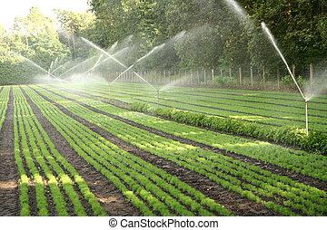 Watering nursery plantation - Water sprinkler system working...