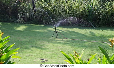 Watering of a green lawn