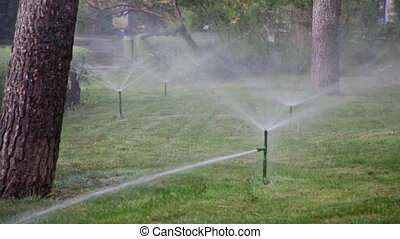 Watering of lawns in park by means of water sprays