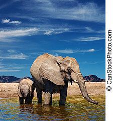 watering, olifanten