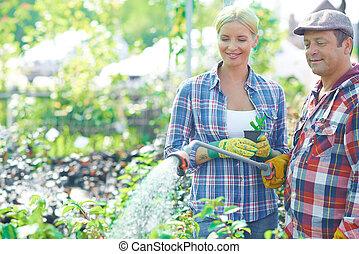 Watering plants - Female gardener looking at mature man...