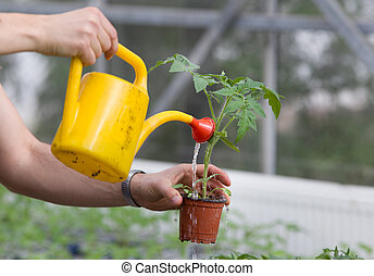 Watering seedling