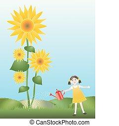 watering sunflowers