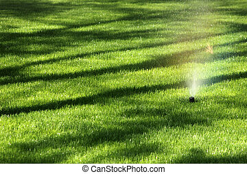 watering the grass with sprinkler s