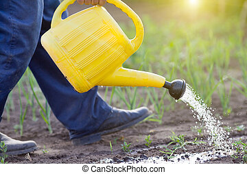 Watering vegetable garden - Close up of water can spraying...