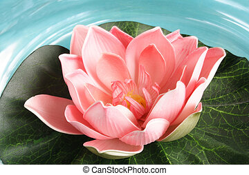 Waterlilly - Beautiful artificial waterlily on the water