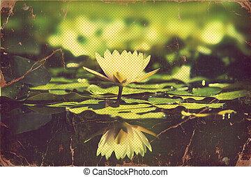 waterlily, em, lagoa, .vintage, flores, cartão