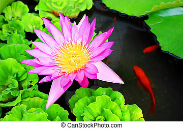 Waterlily Flower and Carps