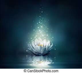 waterlily on water - fairytale background