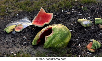 Watermellon peels on a lake bank with burnt butts and plastic