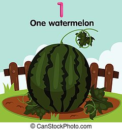 watermelo, illustrator, eersteklas