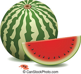 watermelon and a slice - vector watermelon and a slice