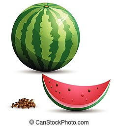 Watermelon and slice. Vector illustration