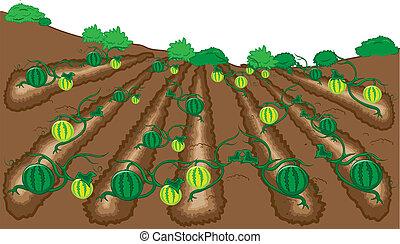 watermelon fruit vector illustration cartoon