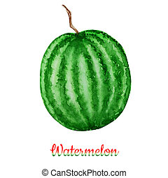 Watermelon fruit watercolor hand drawn illustration, fresh healthy food - natural organic food isolated on white background.