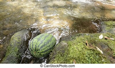 Watermelon in gentle stream