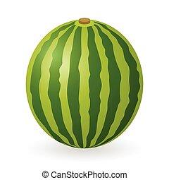 Watermelon vector isolated