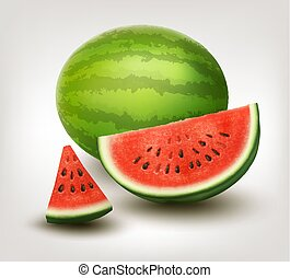 Watermelon. Vector