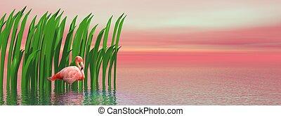 waterplants, フラミンゴ, 日没