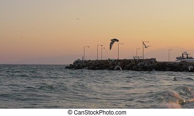 Waterscape with wavy sea, quay and flying seagulls at sunset...