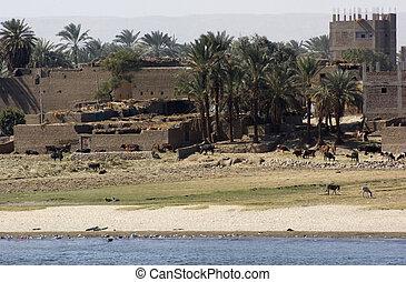 waterside Nile scenery in Egypt - waterside River Nile...