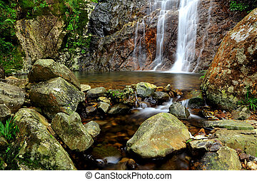 waterval, bos