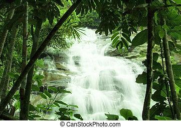 watervallen, in, groen bos