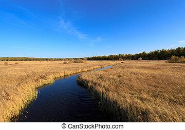 waterway across the wetland