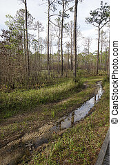 Watery Trail at Tarkiln Bayou Preserve State Park in...