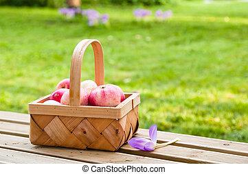 Wattled basket full of ripe apples