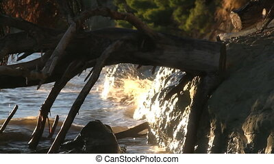 wave cliff tree