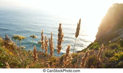 Wave ocean plant water - Perfect wave at sunset plant nature
