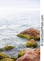 wave smashing against an algae covered rock - Wet sea stones...