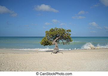 Waves Coming Ashore Around the Divi Divi Tree