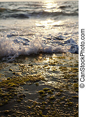 Waves Crushing on Seaweed Rock - Small wave crushing against...