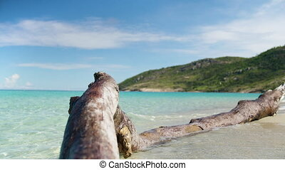 Waves hitting a driftwood on the shoreline - A shot of a...
