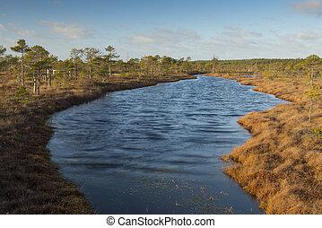 waves in swamp lake