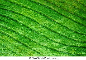 waves in the green grass