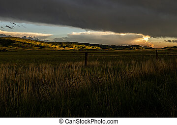 Waves of Grass in Lamar Valley in late afternoon light
